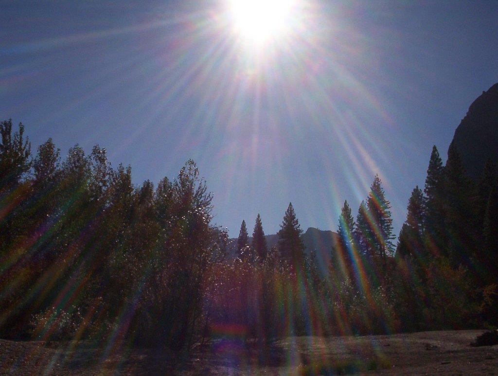 What is a Healing Diet? | Phoenix Helix