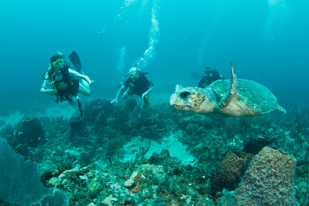 author scuba diving with sea turtle