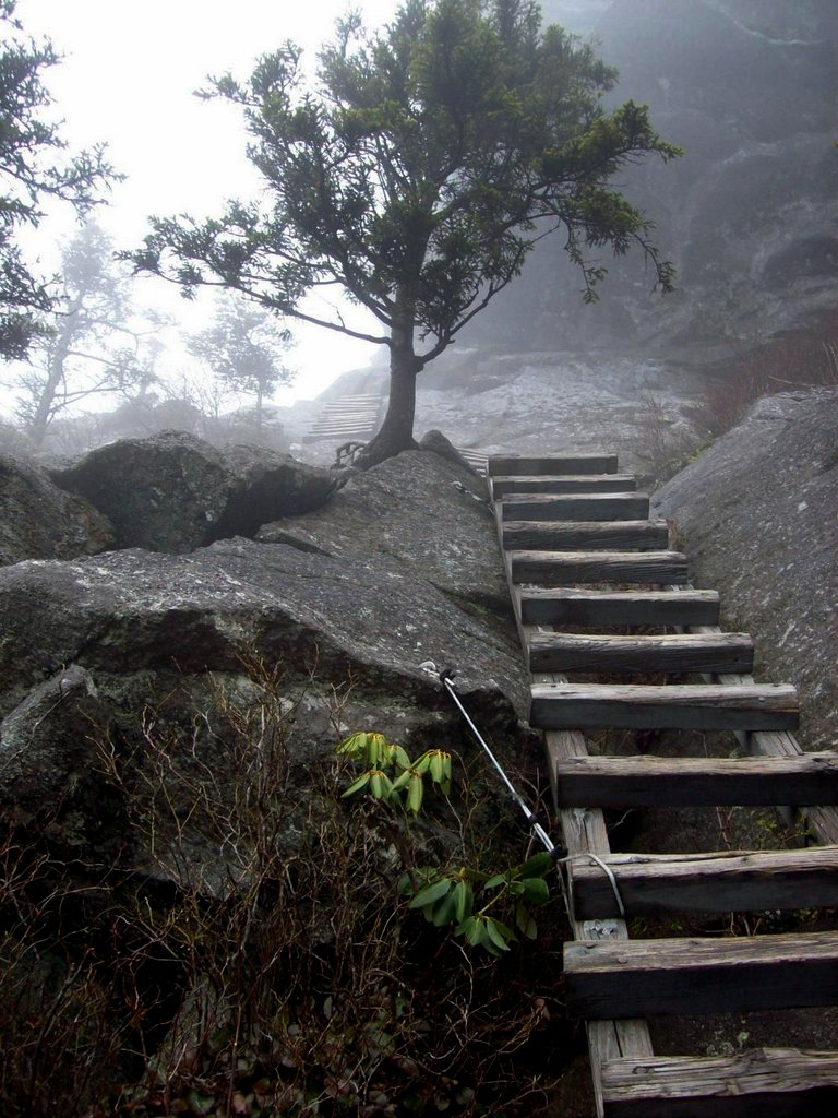 photo of ladder leading up a mountain