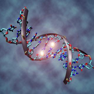 Is DNA Testing Worthwhile?
