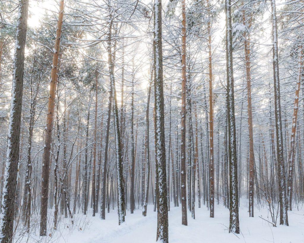 Navigating a Flare-Free Holiday Season | Phoenix Helix