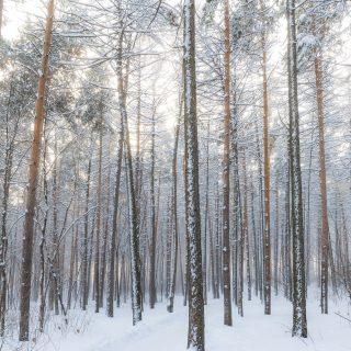 Navigating a Flare-Free Holiday Season